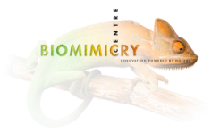 Biomimicry  centre logo